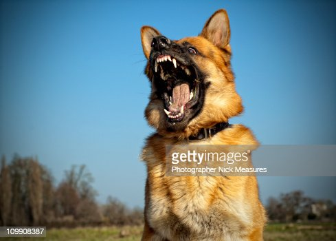 Mad Max : Stock Photo