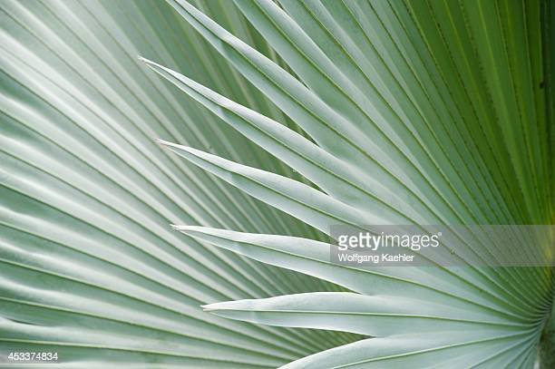 Madagascar Anjajavy Closeup Of Palm Leaf