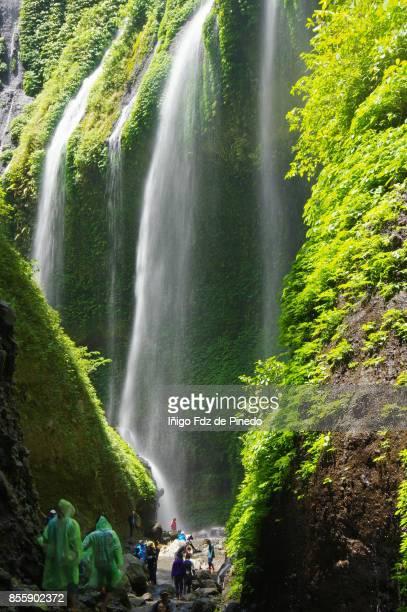 Madakaripura Waterfall - Poboliggo - Sapih - Java - Indonesia