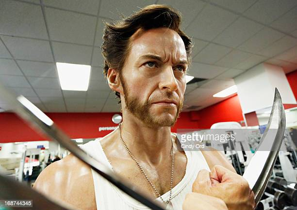 Madame Tussauds New York celebrates their 'Marvel Month of May' by unveiling a wax figure of 'Wolverine' as portrayed by actor Hugh Jackman flexing...