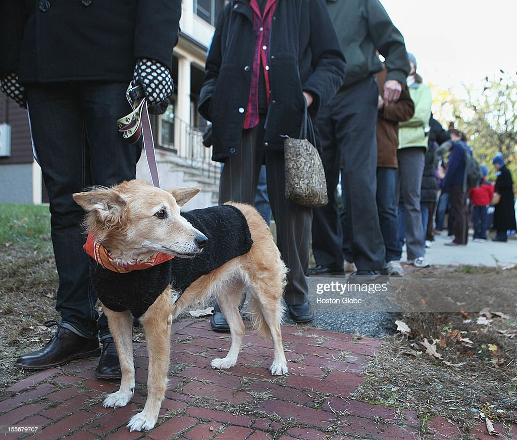 Maddie the dog, 9, waited with her owner outside a polling station on Lexington Avenue in Cambridge on Election Day, Tuesday, November 6, 2012.