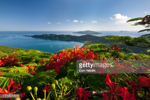 Magens Bay from Drakes Seat with Flamboyant flower
