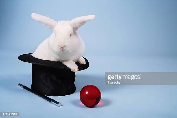 Magische Bunny Rabbit