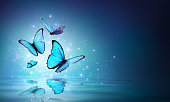 Morpho Butterflies On Mystical Water