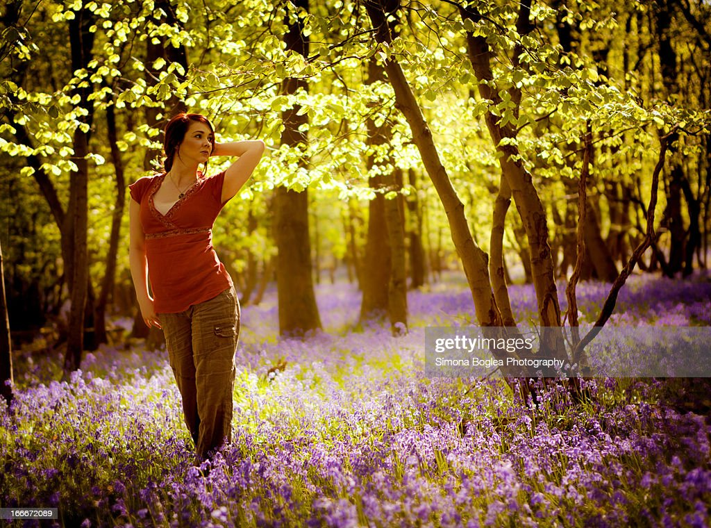 Magic forest : Stock Photo