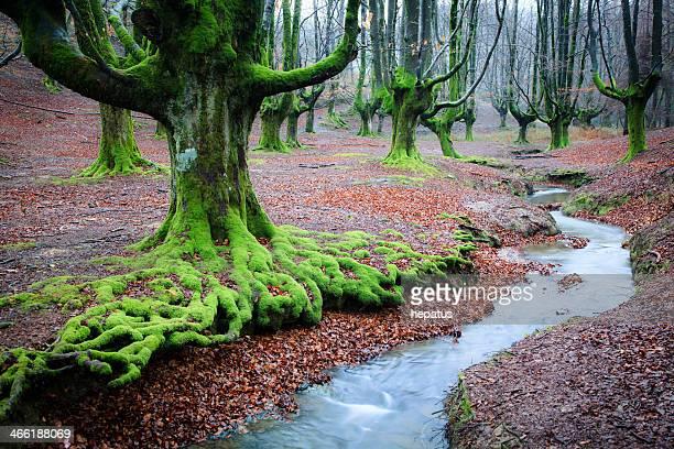 Forêt magique