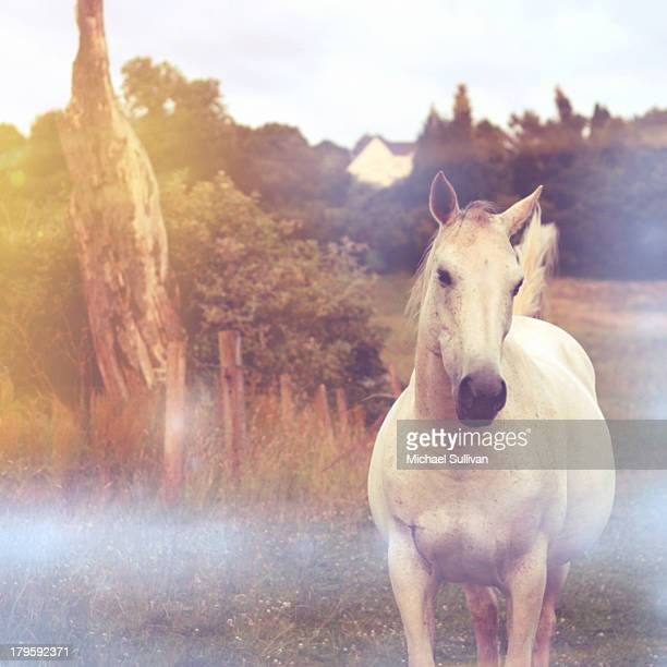 Magic white horse
