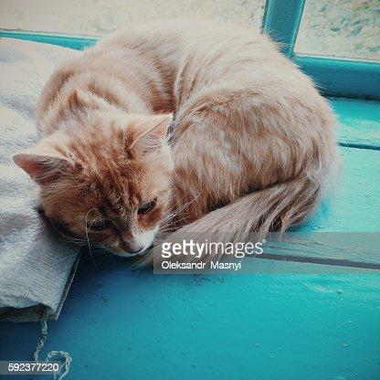 Magic Yellow Cat sits on the window : Stock Photo