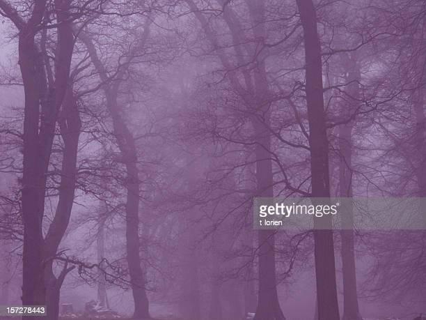 Forêt magique. (Dyrehaven