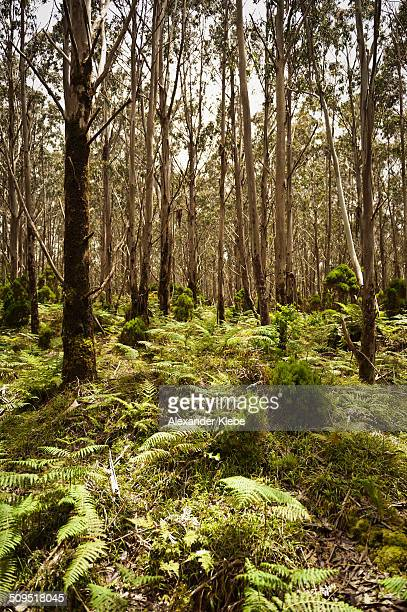 Magical forest with fern and higher trees