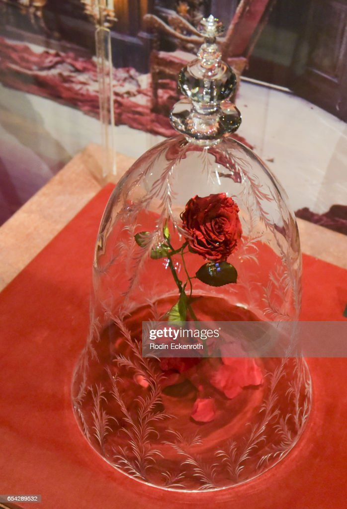 Magical rose movie prop at opening night of Disney's 'Beauty And The Beast' at El Capitan Theatre on March 16, 2017 in Los Angeles, California.