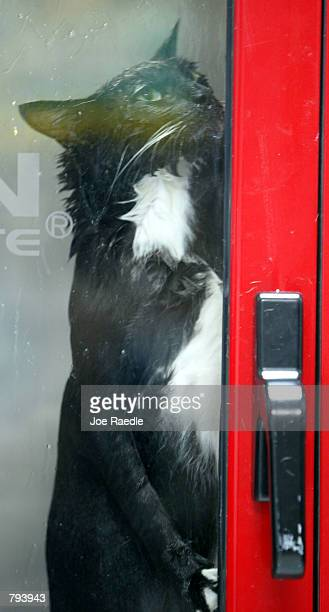 Magira the cat stands in a new pet cleaning machine known as the PetSpa June 21 2002 in Miami Florida The sideloading washing machine features 37...