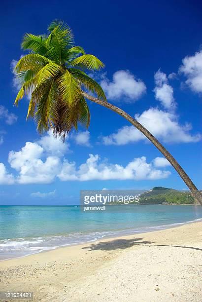 Herrliche Insel Strand mit eine Kokospalme