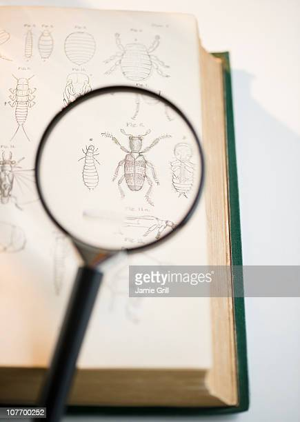 Magnifying glass over book showing insects