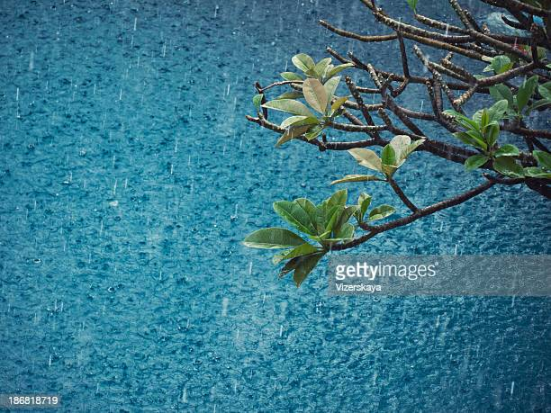 magnolia branches at water background