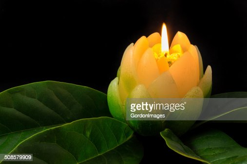 Magnolia Candle Flower : Stock Photo