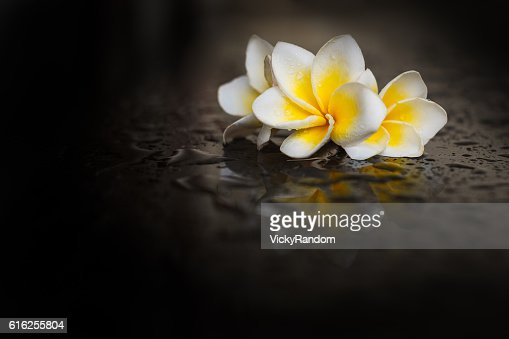 Magnolia flower on wet black background : Foto de stock