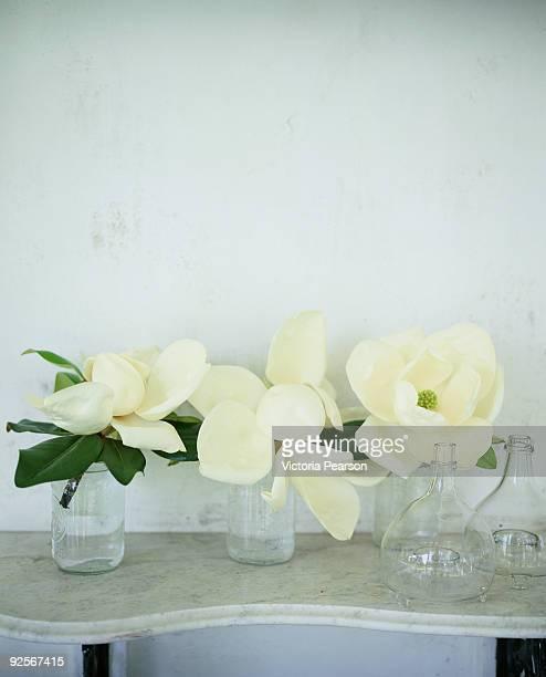 Magnolia grandiflora flowers in glass