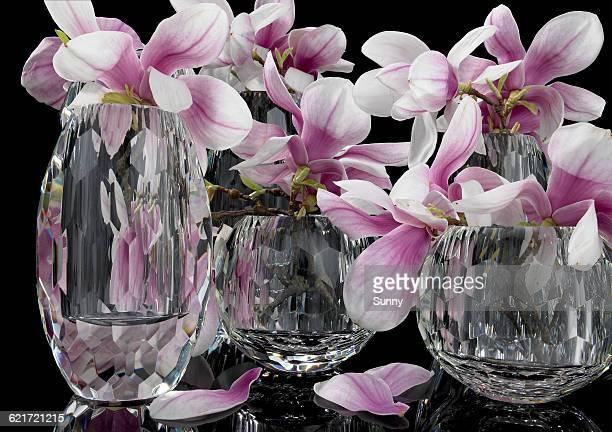 Magnolia in Glasvase