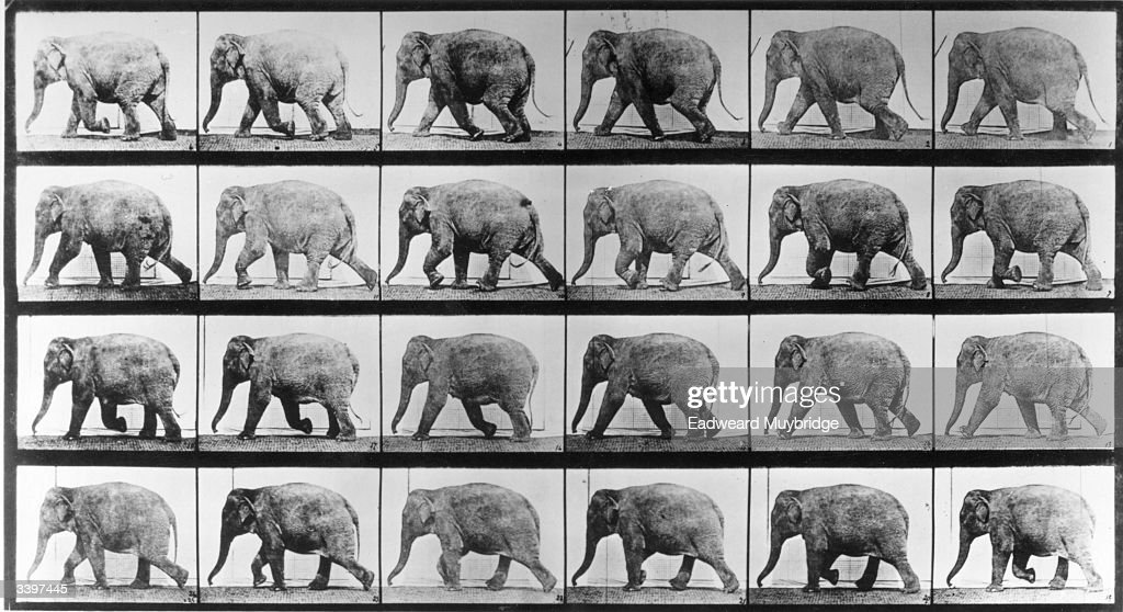 Mahomet the elephant at the canter Original Publication From 'Animal Locomotion' volume 11 pub 1887