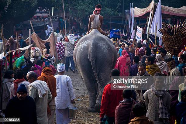 Mahouts (handlers) take elephants down to bathe