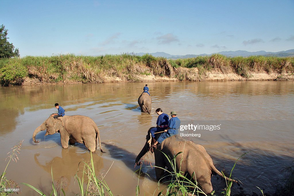 Mahouts take their elephants for a wash in the Ruak River th : News Photo