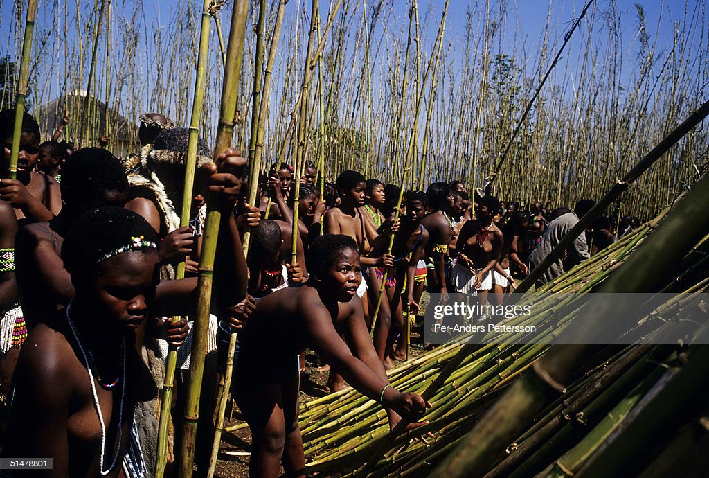 Maidens place reeds at the Royal Palace during the annual Reed Dance on September 11, 2004 in Nongoma in rural Natal, South Africa. About 20,000 maidens from all over South Africa arrived to dance for Zulu King Goodwill Zwelethini at the Enyokeni Royal Palace in Kwa-Nongoma about 350 kilometers from Durban. The girls come to the kingdom to declare their virginity and the ceremony encourages girls and young women to abstain from sexual activity to curb the spread of HIV