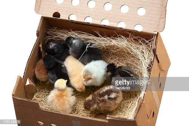 メールオーダー「Chicks 」