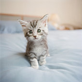 Maine Coon kitten sitting on bed in bedroom