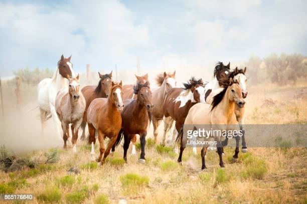 Majestic Herd Of Wild Horses Running In The Desert.  Freedom Bound Away From All That Would Do Them Harm..