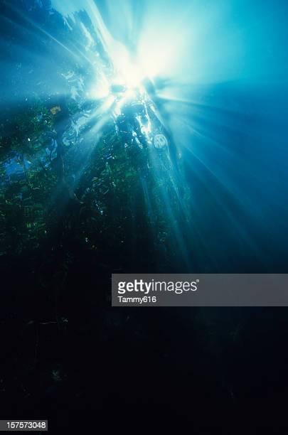 Majestic Kelp Forest