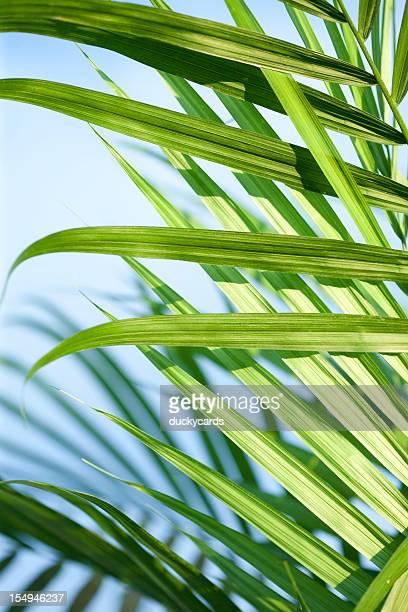 Majestad la palma y cielo azul primer plano