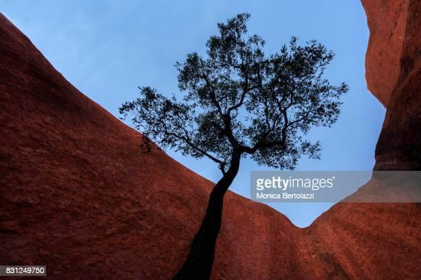Mala Walk at Uluru