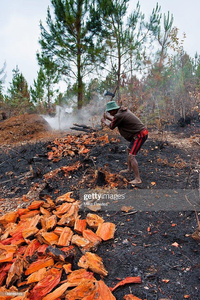 Malagasy man making charcoal, slash & burn forest : Stock Photo