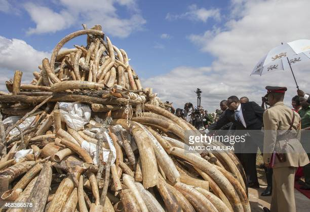 Malawi President Arthur Peter Mutharika leans towards a pile of Elephant Ivory tusks whose burning was postponed during World Wildlife Day...