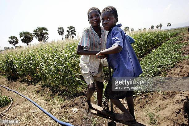 STORY 'Malawifoodirrigation' Two Malawian children pump 12 October 2005 water with a treadle pump from a canal to irrigate maize field in Chitsukwa...