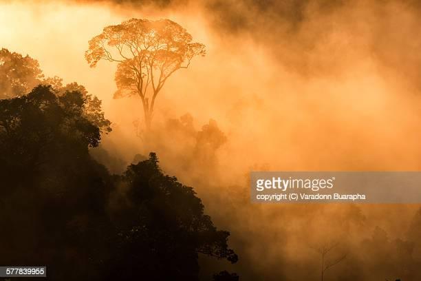Malayan-Type Rainforest