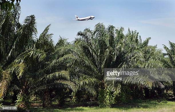 Malaysia Airlines airplane flies over an oil palm plantation on the outskirts of Kuala Lumpur Malaysia on Saturday Dec 29 2007 Palm oil futures in...