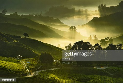 Malaysia, Cameron Highland, Elevated view of tea plantations with mist and morning sunlight