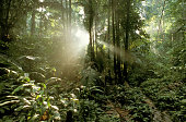 Rainforest between Tekek and Juara, Pulau Tioman Island, Malaysia,
