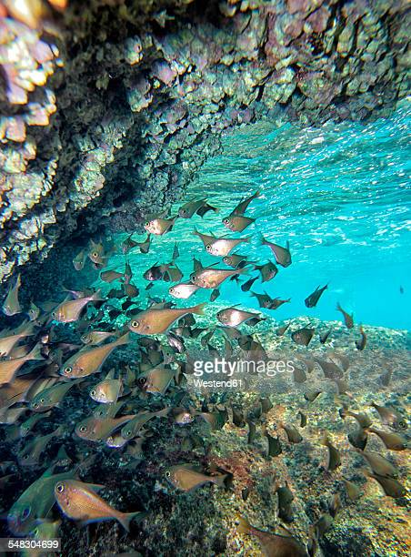 Malaysia, South China Sea, Perhentian island, group of tropical fish swimming beneath a cave