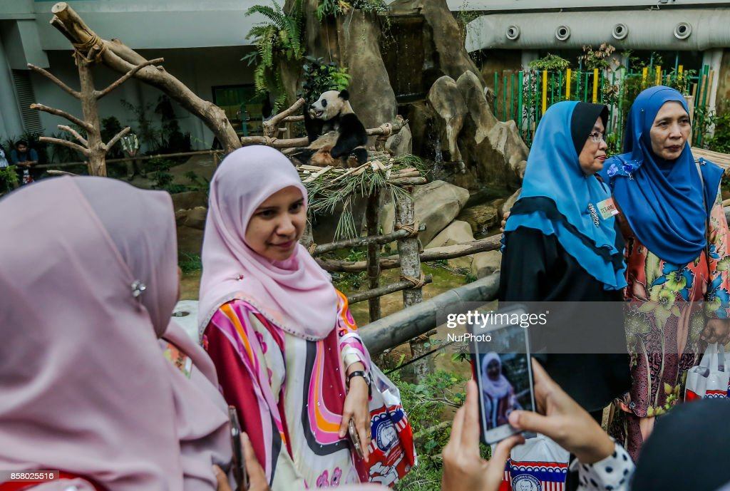 Malaysian women take a selfie with two-year-old female giant panda cub Nuan Nuan reacts inside her enclosure at the Giant Panda Conservation Center in Kuala Lumpur, Malaysia,Oct. 5, 2017. Nuan Nuan, the offspring of panda pair Xing Xing and Liang Liang at Giant Panda Conservation Center, will soon be sent to China.The cub will be returned to China as Malaysia was only given the right to keep the panda, for two years after birth.