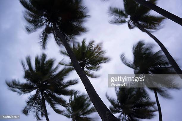 Maldives, Ari Atoll, view to palm trees in storm