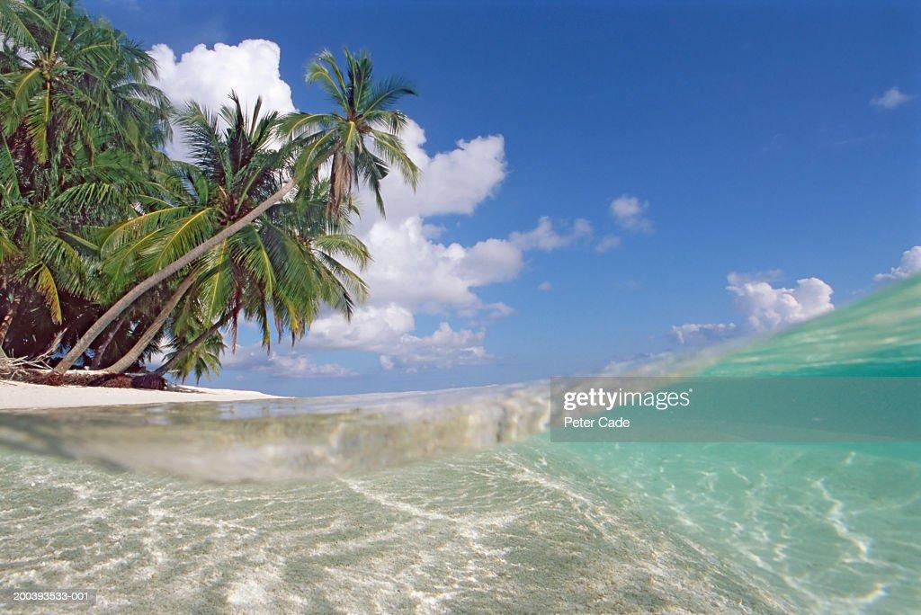 Maldives, Lohifushi, wave and palms on white sand beach, surface view : Stock Photo