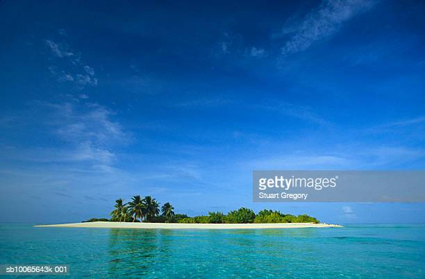 Maldives, tropical island with palm trees in middle of ocean