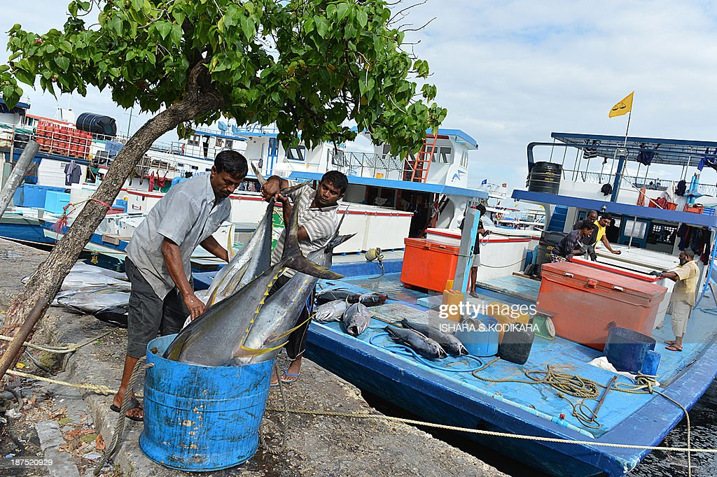 Maldivian fishermen unload fish at a market in the Maldivian capital Male on November 10, 2013. The Maldives Supreme Court suspended the run-off presidential elections for November 10, a day after former president Mohamed Nasheed won the first round in his bid to return to power after being toppled 21 months ago. AFP PHOTO/Ishara S. KODIKARA