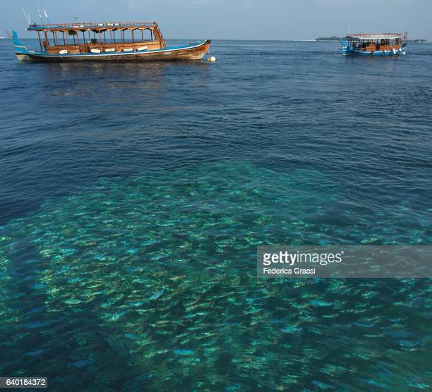 Maldivian Lagoon Wish Shoal Of Fish And Two Dhoni