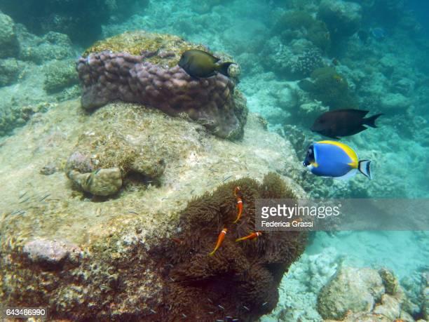 Maldivian Underwater Garden