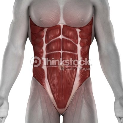 Abdomen Los Músculos Hombre Anatomía Foto de stock | Thinkstock
