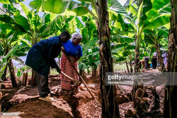 A male and a female farmer work on a field of a farm on which plants grow with the support of the irrigation system of local farming cooperative...